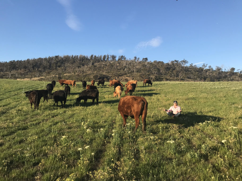 Rachael Treasure meditating in a field with cows
